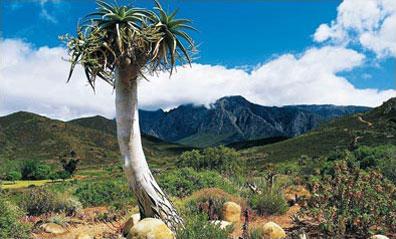 »Kap Sinfonie Rundreise: Karoo, Umgebung Oudtshoorn«