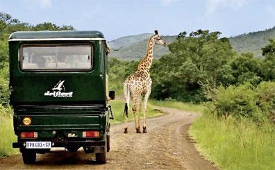 »Erlebnis pur: Abenteuer Krüger Park Rundreise Südafrika«