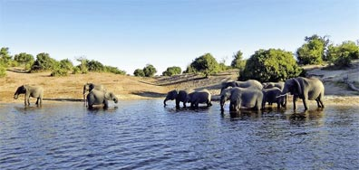 »Etosha Nationalpark - Namibia & Botswana auf eigene Faust«