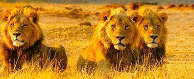 »Reise Limpopo: Namibia - Botswana - Südafrika«
