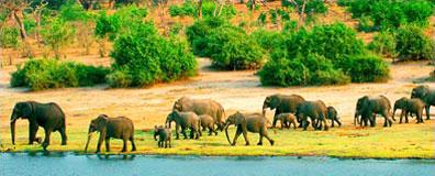 »Elefanten Limpopo - Namibia / Botswana / Südafrika«