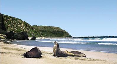 »Kangaroo Island Adventure - Mietwagenreise Australien«