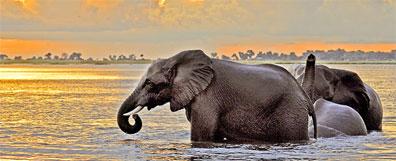 »Moremi - Elefantenherde Chobe Nationalpark«
