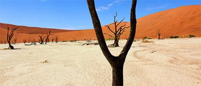 »Etosha Nationalpark in Namibia - faszinierde Natur erleben«