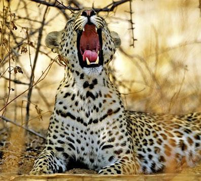 »Das wilde Herz Afrikas: Der Chobe Nationalpark«