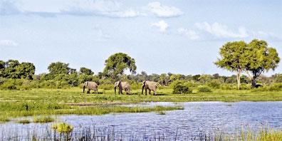 »Das wilde Herz Afrikas: Elefanten im Caprivi-Streifen«