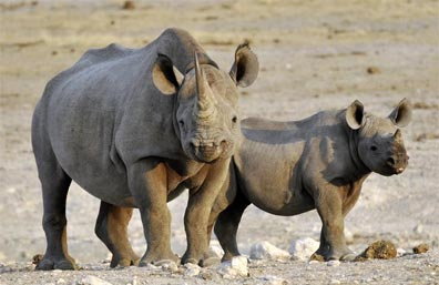 »Etosha Nationalpark - Reise Namibia Highlights«