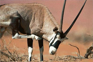 »Erlebnis pur: Namibia Explorer Camping Safari«