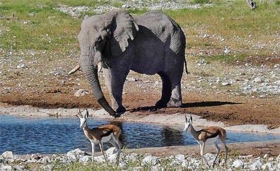 »Namibia Hautnah Wanderreise: Etosha Nationalpark«