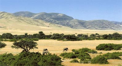 »Kulturelle Vielfalt Namibias: Tiererlebnis Etoscha Park«