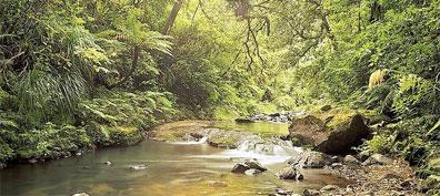 »Waipoua Wald - Busreisen Naturwunder Neuseelands«