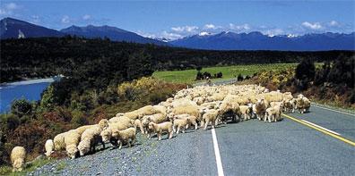 »Das wahre Neuseeland - Mietwagenreise durch Neuseeland«