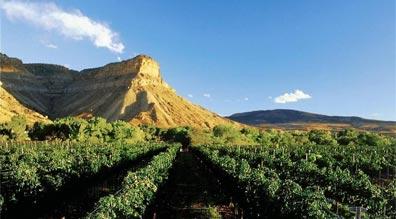 »Colorado & die Rocky Mountains: Weinreben bei Grand Junction«