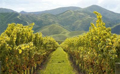 »Marlborough Weinregion - Mietwagenreise Neuseeland entdecken«