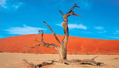 »Deadvlei - Rundreise Faszination Namibia«