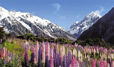 »Neuseeland für Naturfreunde - ein intensives Reiseerlebnis«
