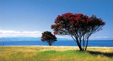 »Neuseeland Kaleidoskop - Neuseeland Busrundreisen«
