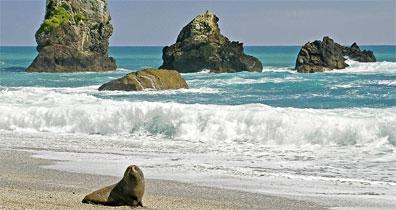 »Kleingruppen-Safari Neuseeland: Munro Beach«