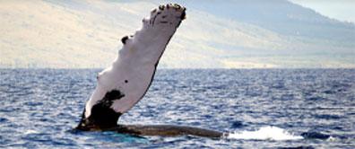 »Kaikoura - den Walen ganz nah: Bootstour zur Walbeobachtung«