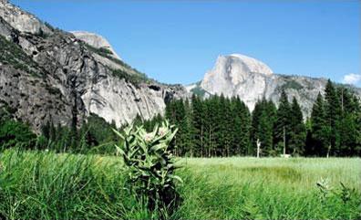 »Reise zum Yosemite-Nationalpark - Höhepunkte des Westens«