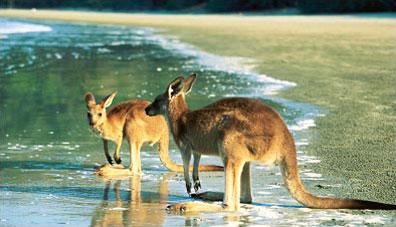 »Ostküste auf eigene Faust - Australien Reise Mietwagen«
