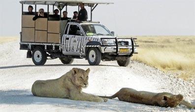 »Namibia: Wildbeobachtungsfahrt im Etosha Nationalpark«