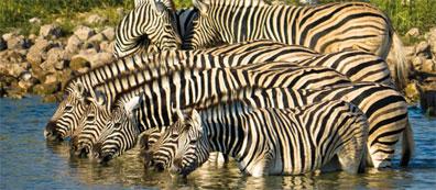 »Namibia Reise: Atlantik, Dünen und wilde Tiere«