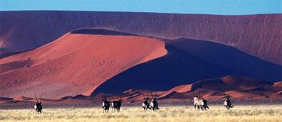 »11-Tage-Reise Namibia: Atlantik, Dünen und wilde Tiere«
