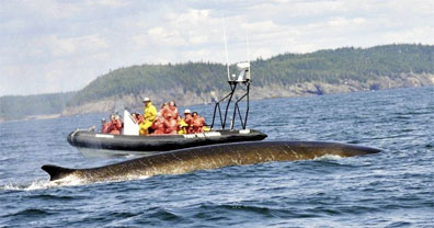 »Walbeobachtungstour, Bay of Fundy - Ostkanada Reise«