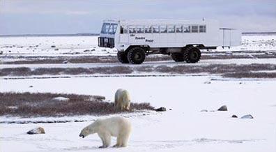 »Erlebnisreise: Eisbären an der Hudson Bay«
