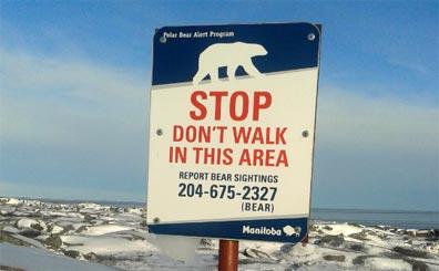 »Reise zu den Eisbären im Norden Kanadas«