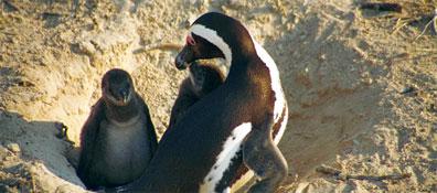»Studienreise Südafrika - Grootbos Nature Reserve«