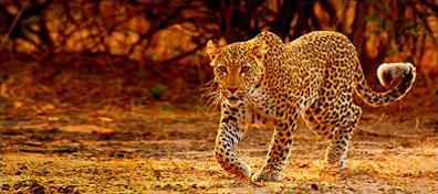 »Abenteuer Etosha Namibia - eine unvergessliche Rundreise«