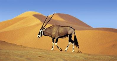 »Namibia Entdeckungsreise: Ein Traum für Naturliebhaber«