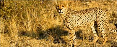 »Etosha-Nationalpark Safari - Namibia Sossusvlei Reise«