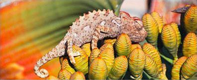»Rundreise Sossusvlei Namibia - Faszinierende Tierwelt«
