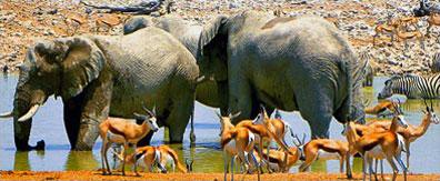 »Tierbeobachtungen Etosha-Nationalpark - Namib entspannt«