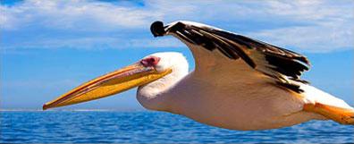 »Rundreise Namib entspannt - Pelikane Walvis Bay«