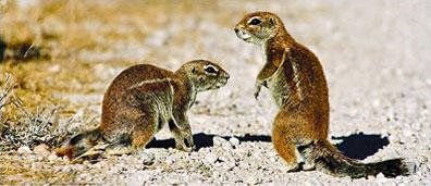 »Erdmännchen-Familie - Rundreise Namib entspannt«