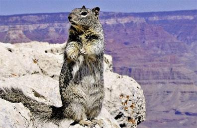 »Grand Canyon Nationalpark - Legendäre Route 66«