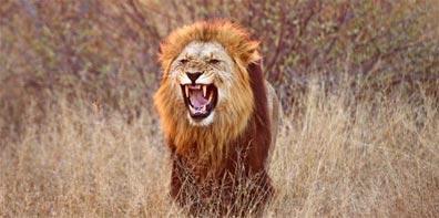 »Big Five: Elefanten, Nashörner, Büffel, Löwen und Leoparden«