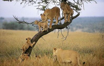 »Rundreise Kruger Nationalpark - Südafrika für Einsteiger«