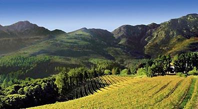 »Tagestour Weinregion - Weinberge im Umland von Kapstadt«