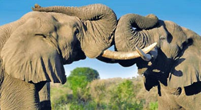 »Krüger Nationalpark Safari - Natur und Wildnis erleben«