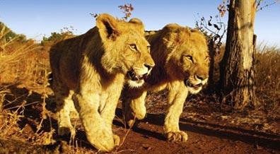 »Traumurlaub Südafrika Safari - Südafrika Rundreise«