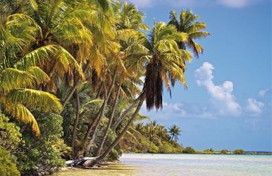 »Südsee Traumreise: Unberührter Strand in Polynesien«