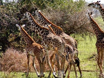 »Tansania Flugsafari Serengeti und Sansibar«
