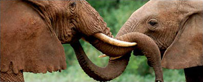 »Elefantenherde im Tarangire-Nationalpark«