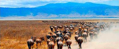 »Serengeti Tansania - die Weite der Savanne«