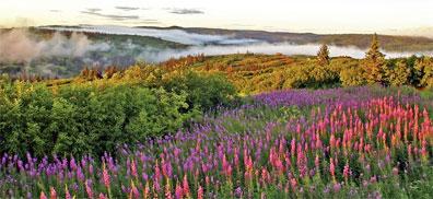 »Mietwagenreise Alaska für Genießer: Fireweed«